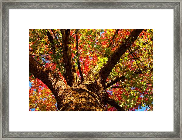 Colorful Autumn Abstract Framed Print