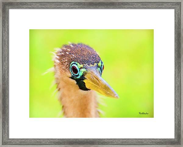 Colorful Female Anhinga Framed Print