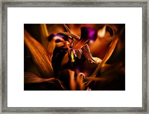 Colorful Finale 05 Framed Print by Nora Batternay