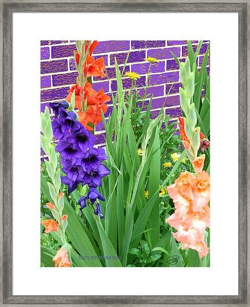 Colorful Gladiolas Framed Print