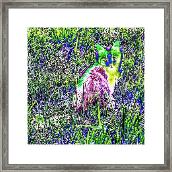 Colorful Kitty Framed Print