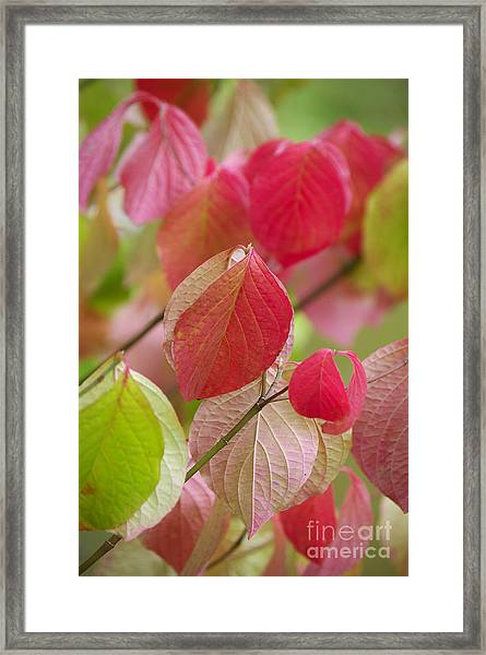 Colorful Leafs  Framed Print