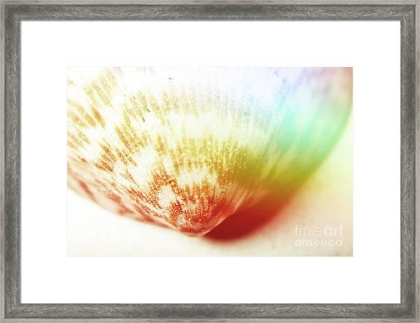 Colorful Light Flare Over Seashell Framed Print