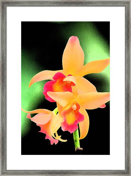 Colorful Orchid Framed Print by Nanette Hert