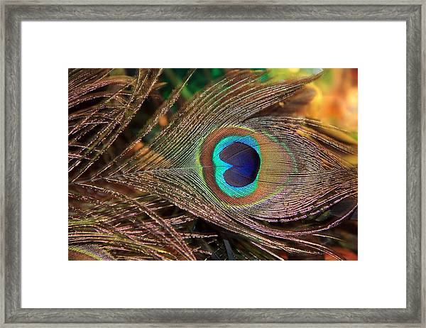 Colorful Peacock Feather Framed Print