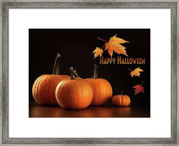 Colorful Pumpkins On Wood Table On Dark  Framed Print