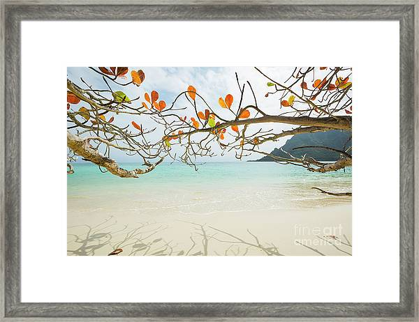 Colorful Tree North Shore Framed Print