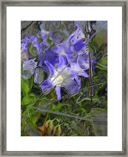 Colors Of Nature 6 Framed Print