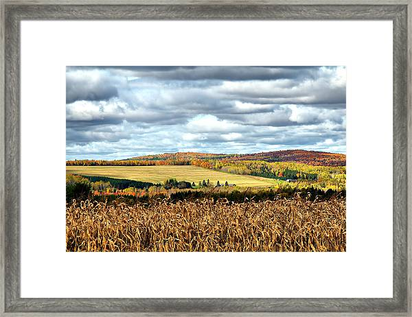 Colors Of The Field Framed Print by Gary Smith