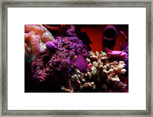 Colors Of Underwater Life Framed Print