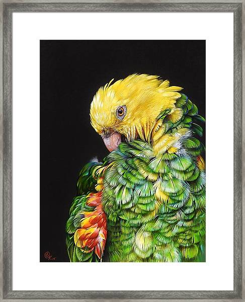 Colours Of The Jungle - Yellow-headed Amazon Framed Print