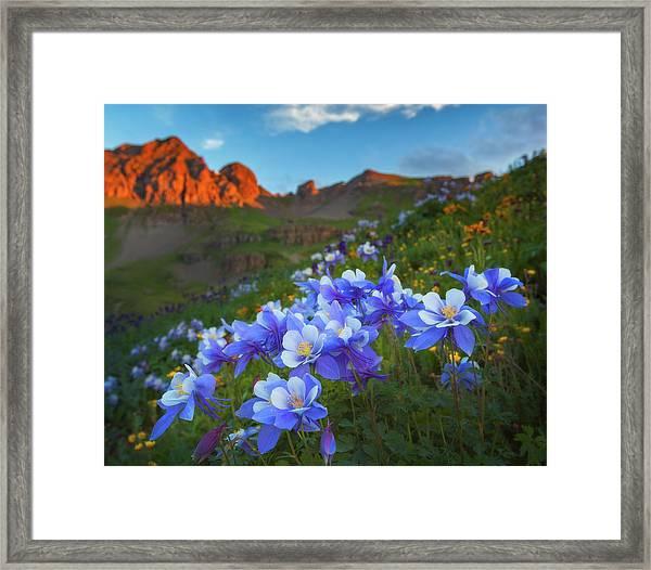 Columbine Sunrise Framed Print