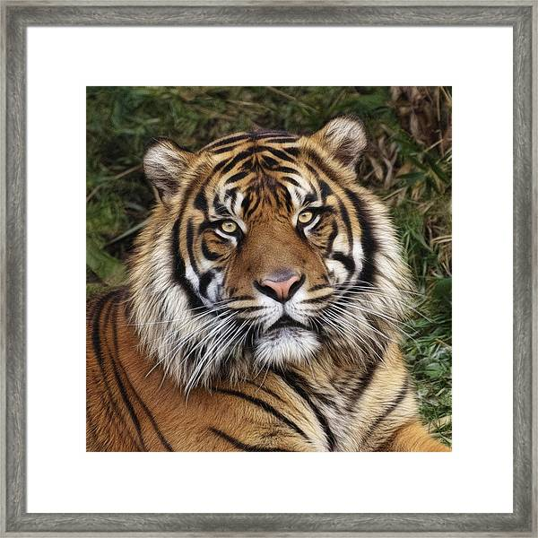 Come Pet Me Framed Print