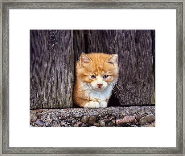 Comin' Out To Play Framed Print by Bob Nolin