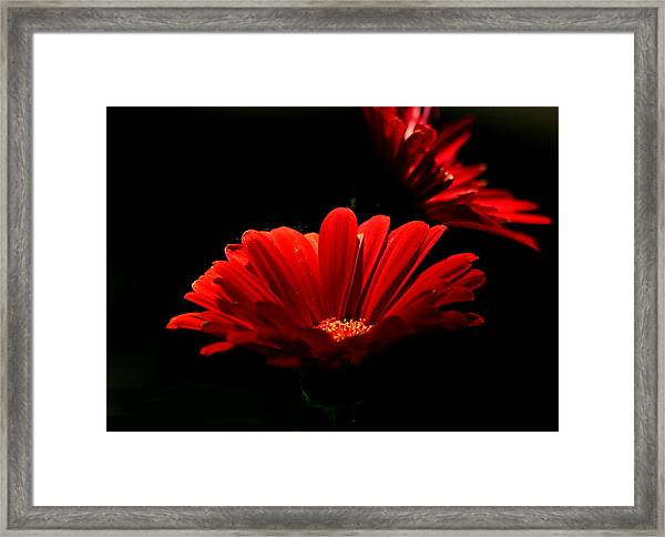 Coming In To The Light Framed Print