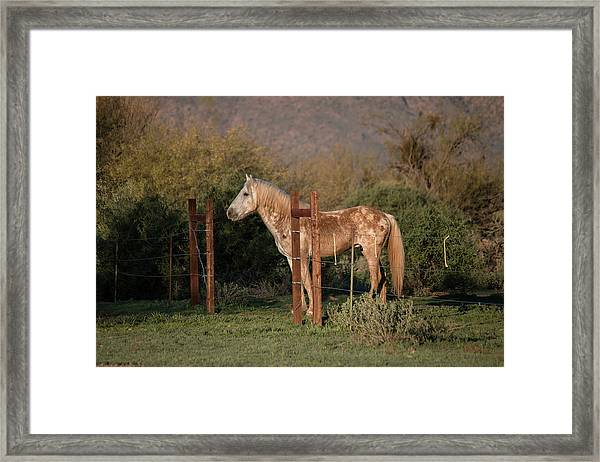 Coming Through The Fence Framed Print