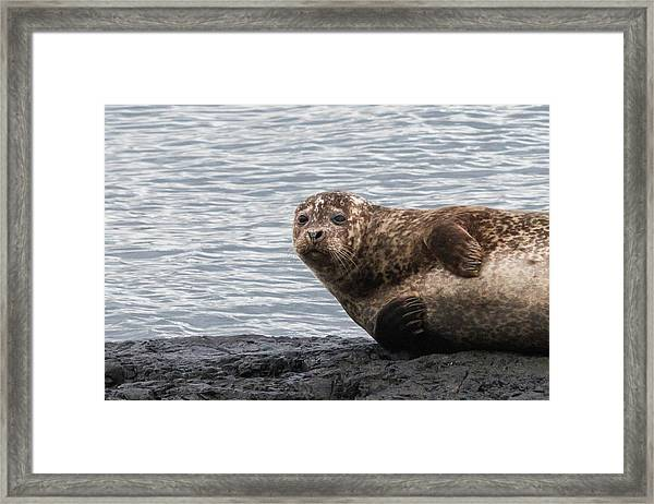 Common Seal Portrait Framed Print