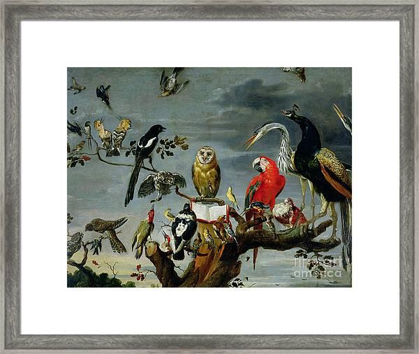 Concert Of Birds Framed Print