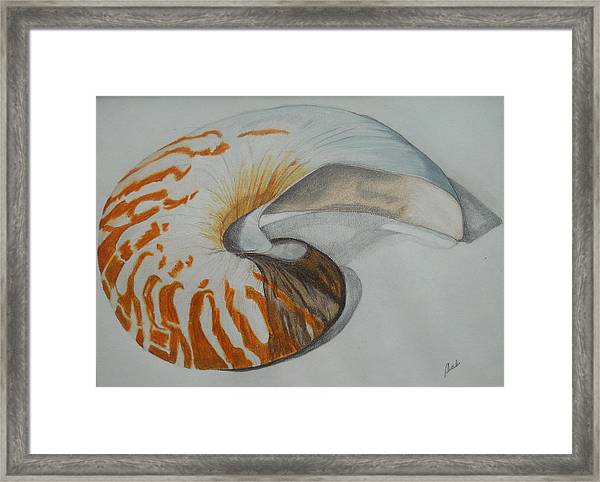 Conch Framed Print