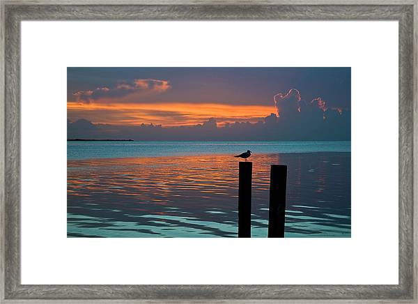 Conch Key Sunset Bird On Piling Framed Print