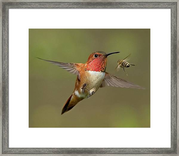 Confrontation Framed Print