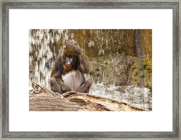 Confusion Framed Print