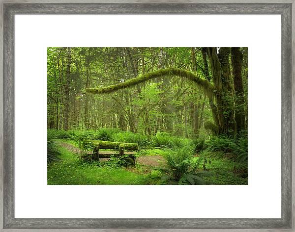 Contemplative Rain Forest Framed Print