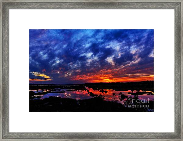 Framed Print featuring the photograph Contrast by DJA Images