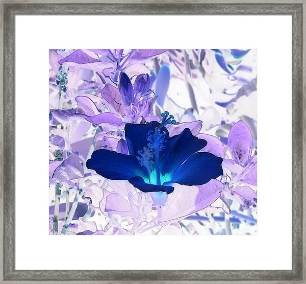 Cool Blue Hawaiian Hibiscus Framed Print