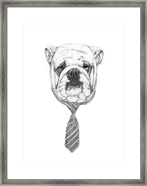 Cooldog Framed Print