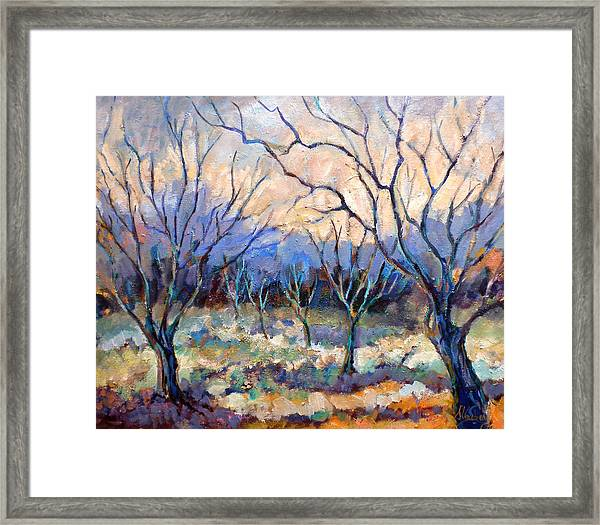 Coonan's Persimmon Orchard Framed Print