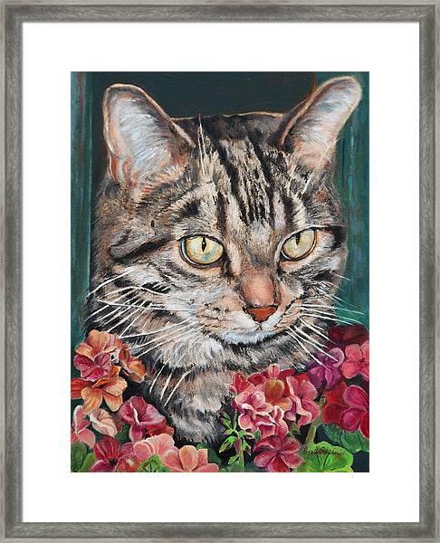 Cooper The Cat Framed Print
