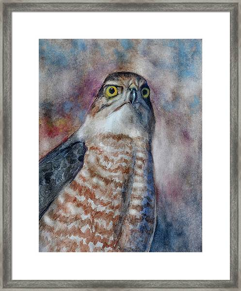Coopers Hawk Wc Framed Print