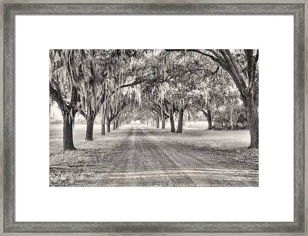 Coosaw Plantation Avenue Of Oaks Framed Print