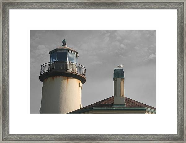 Coquille Framed Print