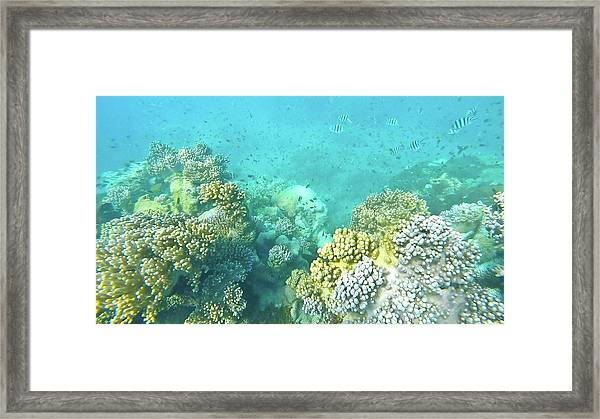 Framed Print featuring the photograph Coral by Debbie Cundy