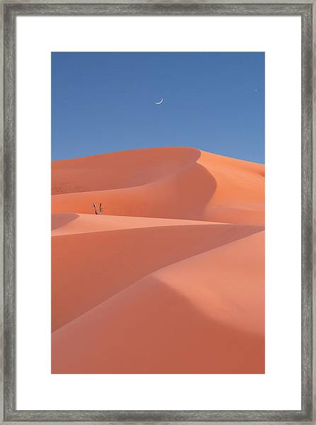 Framed Print featuring the photograph Coral by Dustin LeFevre