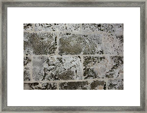 Coral Wall 205 Framed Print
