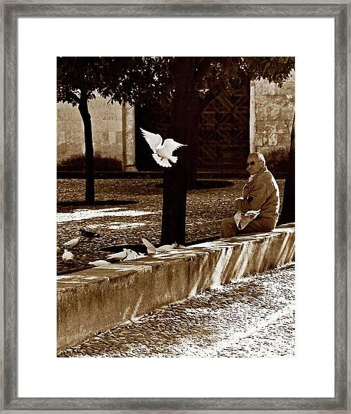 Framed Print featuring the photograph Cordoba Flight by Lorraine Devon Wilke