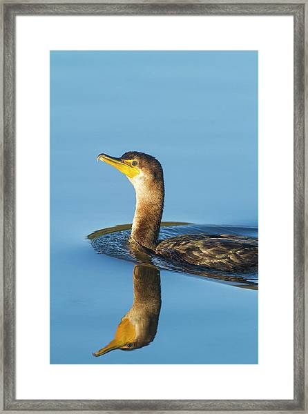 Cormorant Reflection Framed Print