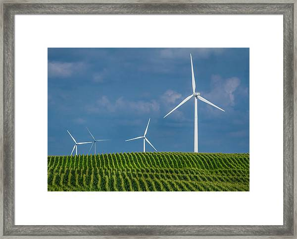 Corn Rows And Windmills Framed Print
