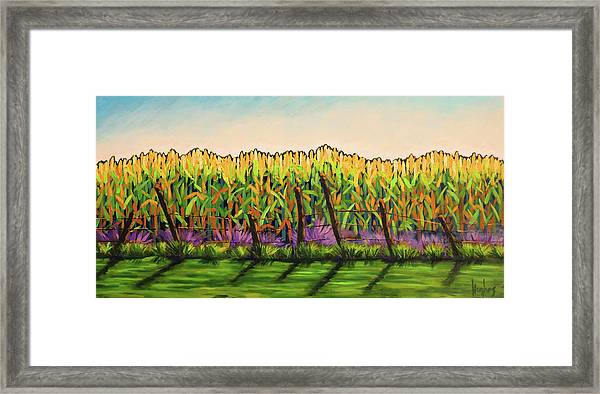 Cornfield Color Framed Print