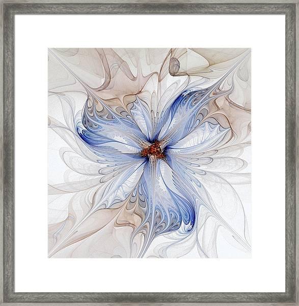 Cornflower Blues Framed Print