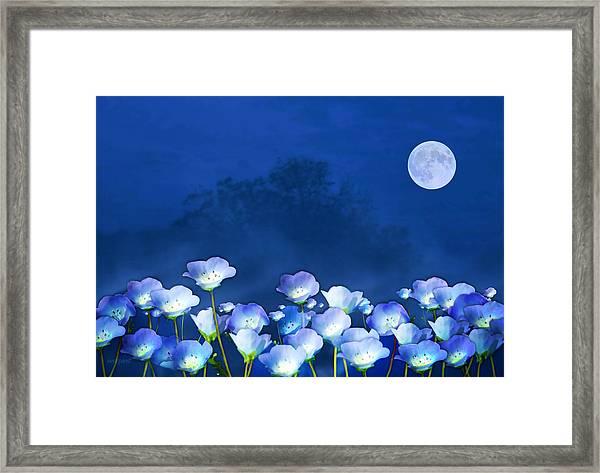Cornflowers In The Moonlight Framed Print