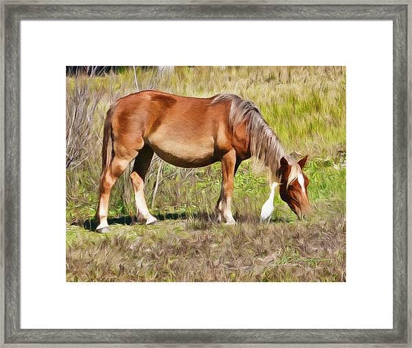 Corolla's Wild Horses Framed Print
