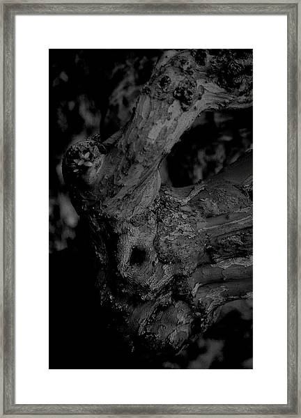 Corpses Fossil Framed Print