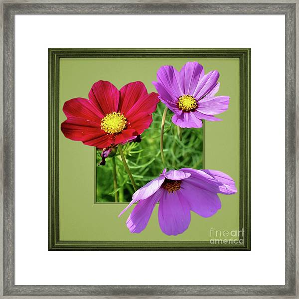 Cosmos Flower Peeking Out Framed Print