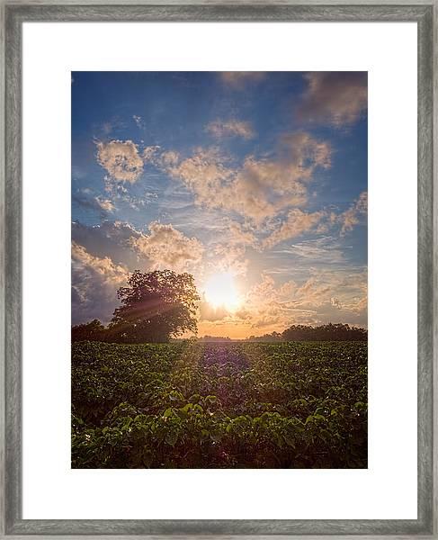 Cotton Field Sunset Framed Print