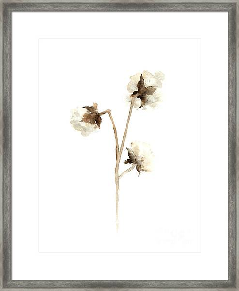 Cotton Fine Art Print Framed Print