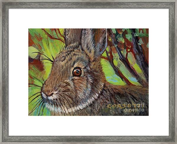 Cotton Tail Rabbit Framed Print